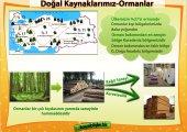 Ormanlar Pano Çalışması .jpg